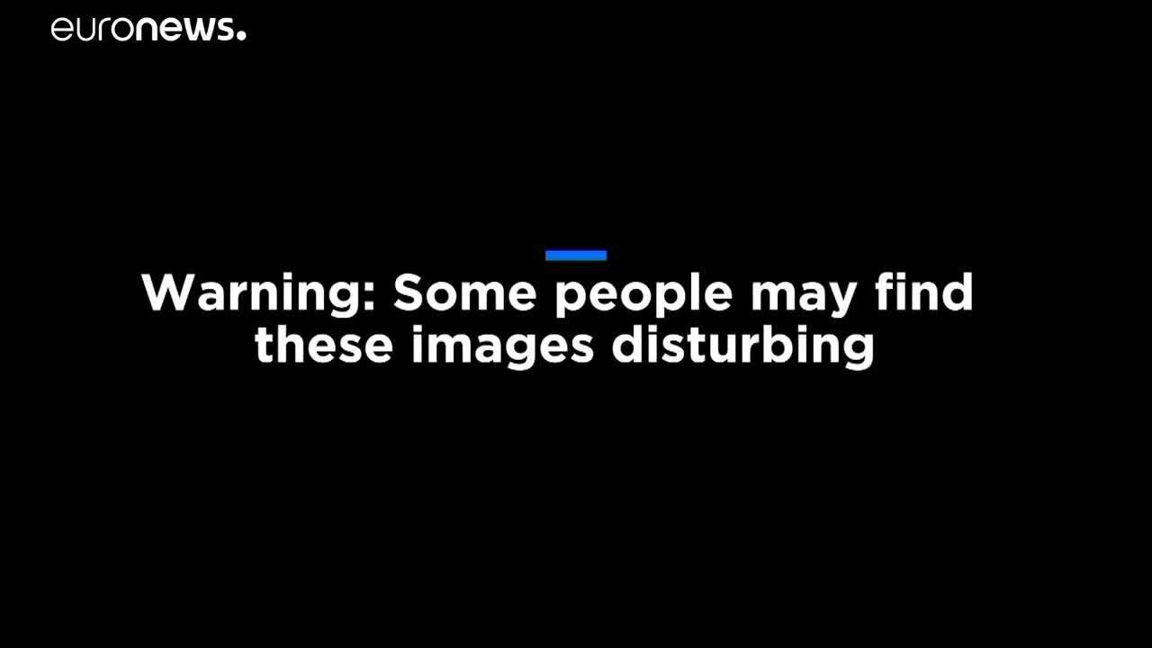 Video gắn 'cửa sổ' bên hông bò sữa gây tranh cãi ở Pháp