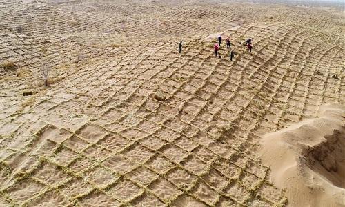 Rào chắn cát bằng gốc rạ giúp Trung Quốc đối phó sa mạc hóa