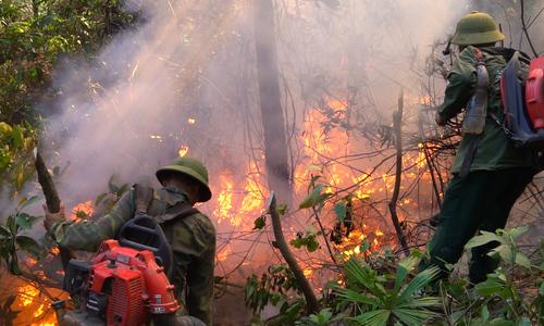 Hơn 500 người dập tắt vụ cháy rừng thông trên núi Hồng Lĩnh