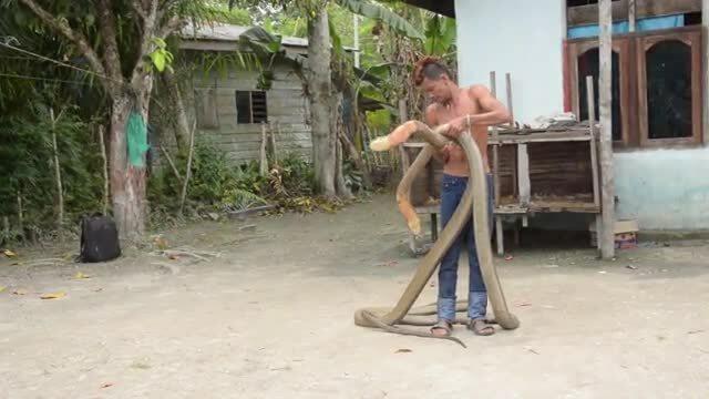 Người dụ rắn Indonesia miễn dịch với nọc độc
