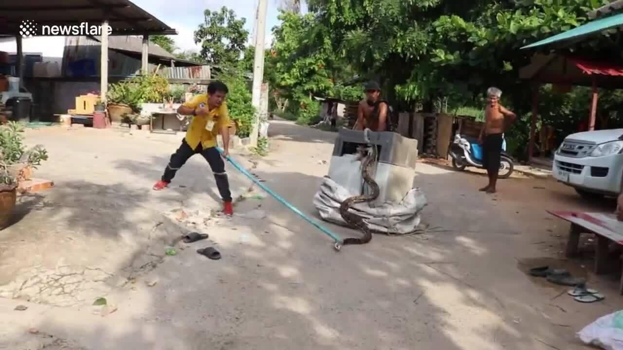 Trăn dài 3 m trốn trong máy giặt ở nhà dân Thái Lan