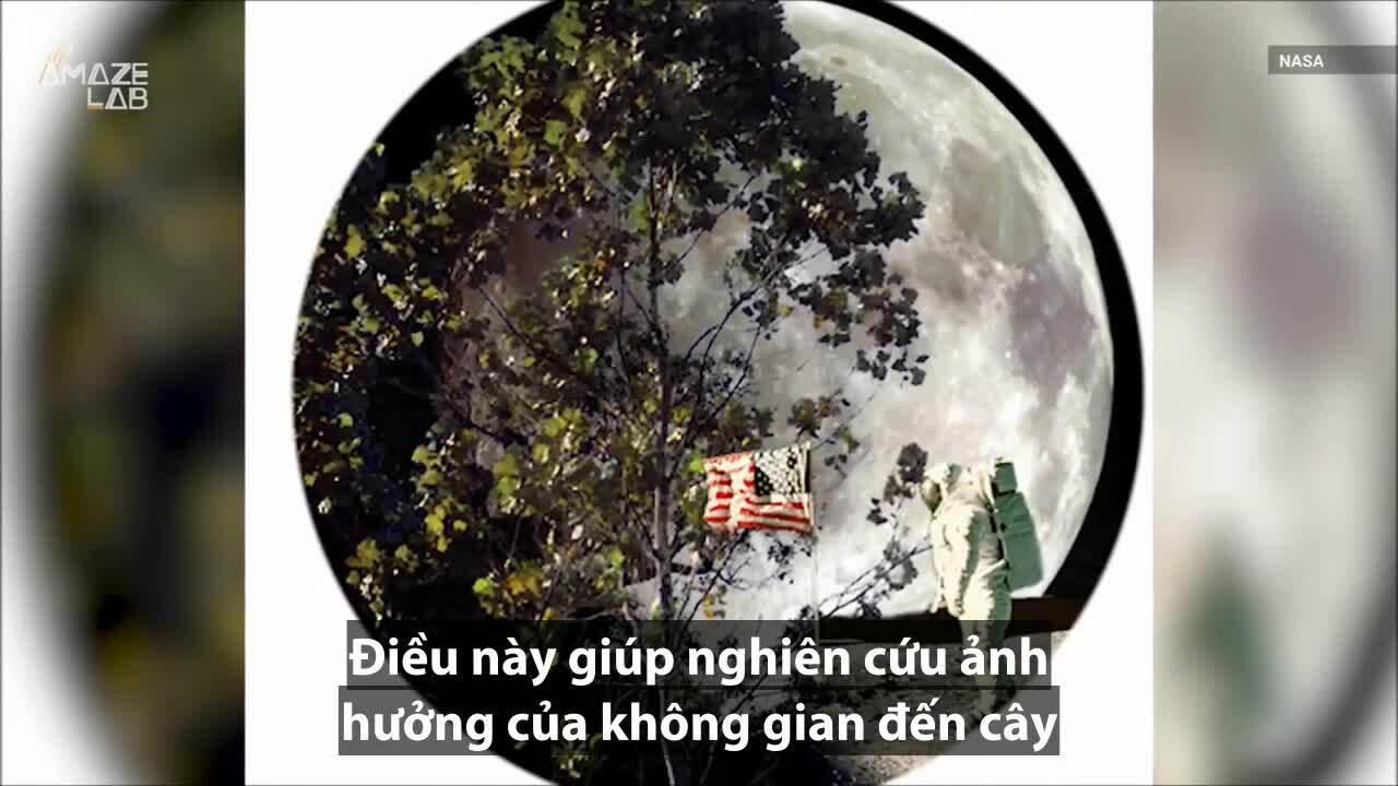 Số phận của những 'cây Mặt Trăng' trồng ở Trái Đất
