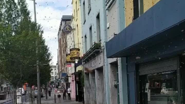 Bầy ong gây náo loạn khu phố ở Ireland