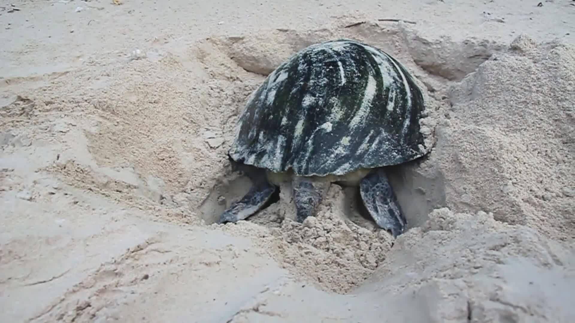 Bài 1: Hành trình Hội An xin 2.000 trứng rùa Côn Đảo