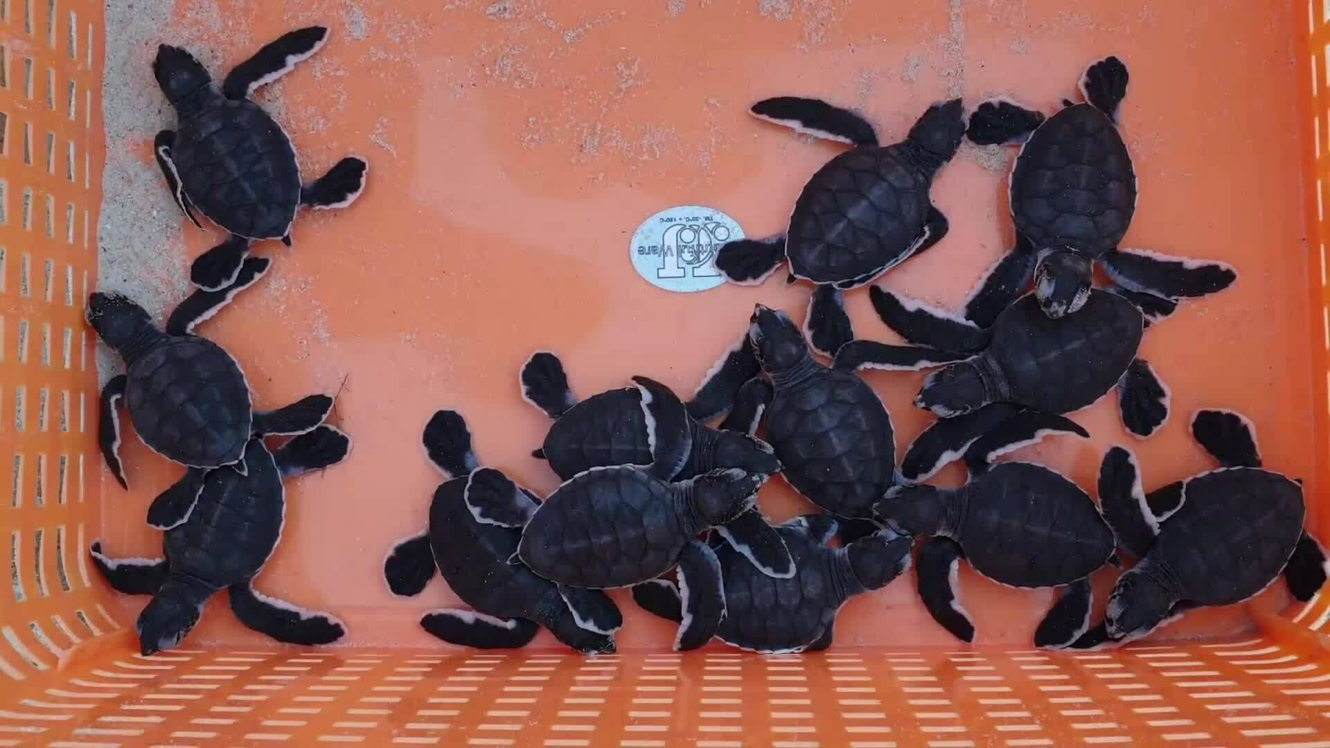 Bài 2: Trắng đêm canh rùa nở