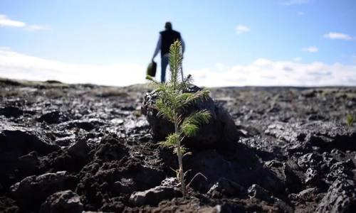 Ireland trồng 6.000 ha rừng trên vùng đất 'giống Mặt Trăng'