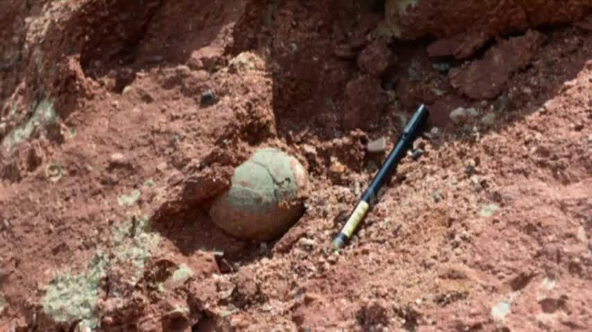 Bé trai 9 tuổi tìm thấy trứng khủng long hóa thạch 66 triệu năm