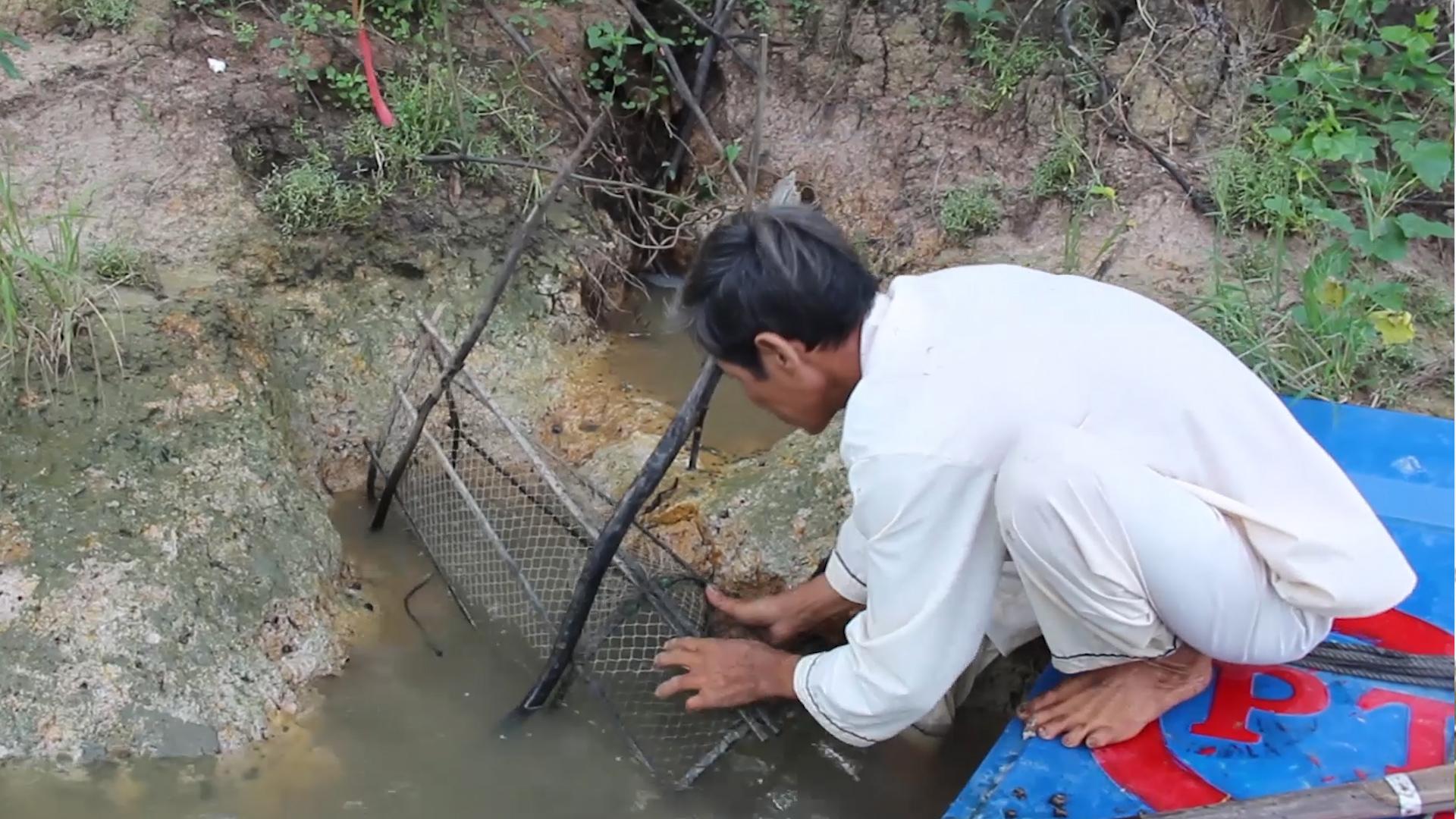 Lão nông miền Tây đặt lợp bắt cá sông mùa nước lũ