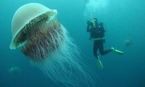 Những sinh vật khổng lồ ngự trị đại dương