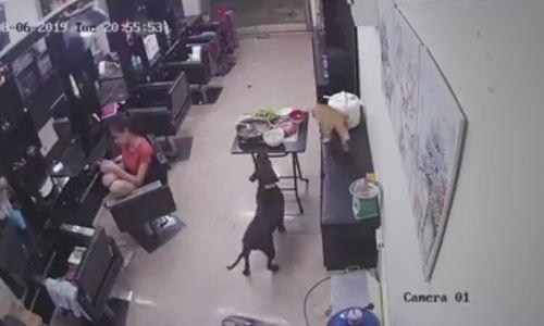 Chó chạy 'mất phanh' hất cả mâm cơm của cô chủ xuống đất