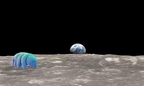 Hàng nghìn con gấu nước có thể đang sống trên Mặt Trăng