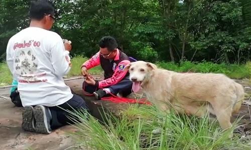 Chó mẹ gọi người tới giải cứu đàn con mắc kẹt dưới hố sâu