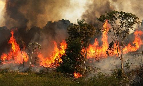 Cháy rừng ở Amazon đạt mức kỷ lục trong năm nay