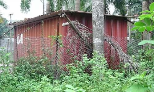 Lô gỗ sưa 146 tỷ ở Hà Nội được bảo vệ nghiêm ngặt chờ ngày bán
