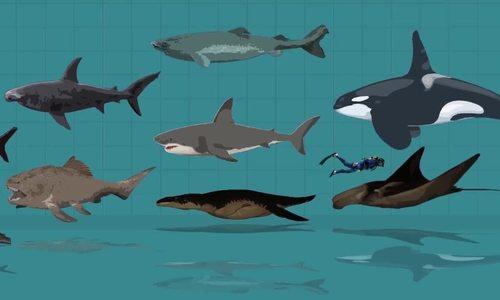 So sánh kích thước các loài 'thủy quái' dưới đại dương