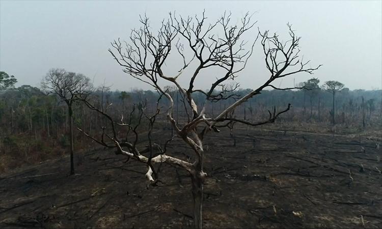 Những khoảng rừng Amazon bị lửa tàn phá