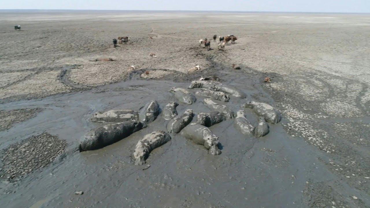 Động vật kiệt sức nằm chờ chết ở Botswana do hạn hán