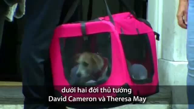 'Đệ nhất khuyển' tới văn phòng thủ tướng Anh