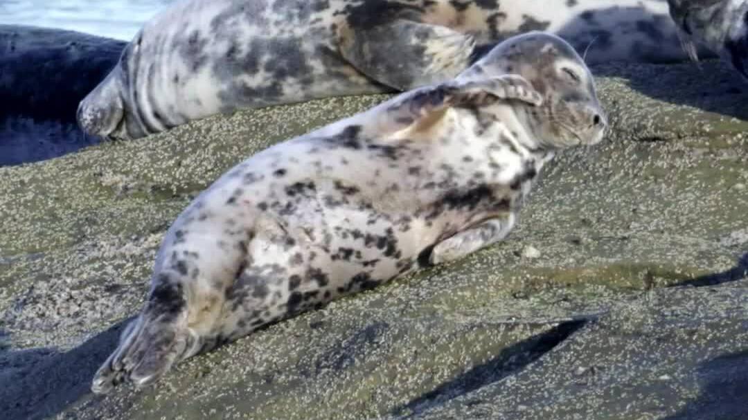 Đảo St. Mary - thiên đường cho động vật biển hoang dã