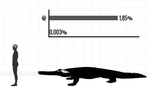 So sánh tỷ lệ khối lượng não ở người và động vật