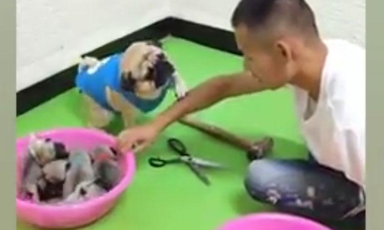 Cún cưng thắng dễ cậu chủ khi chơi oẳn tù tì