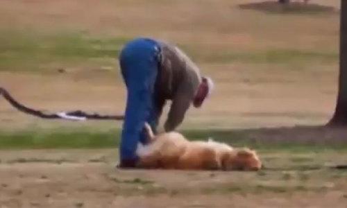 Chú chó giả chết để được ở lại chơi công viên