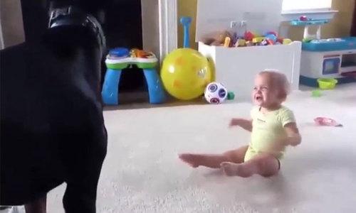 Em bé cười 'như được mùa' khi chơi đùa cùng cún cưng