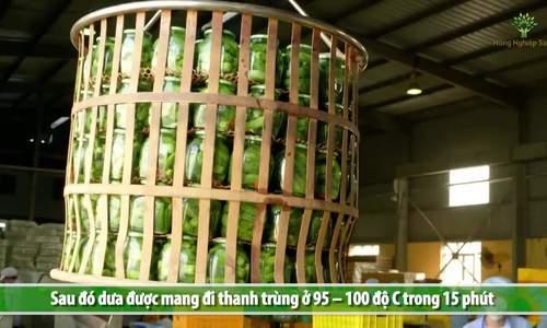 Quy trình sản xuất dưa bao tử đóng hộp