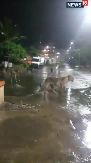 Đàn sư tử 7 con đi dạo giữa đường phố
