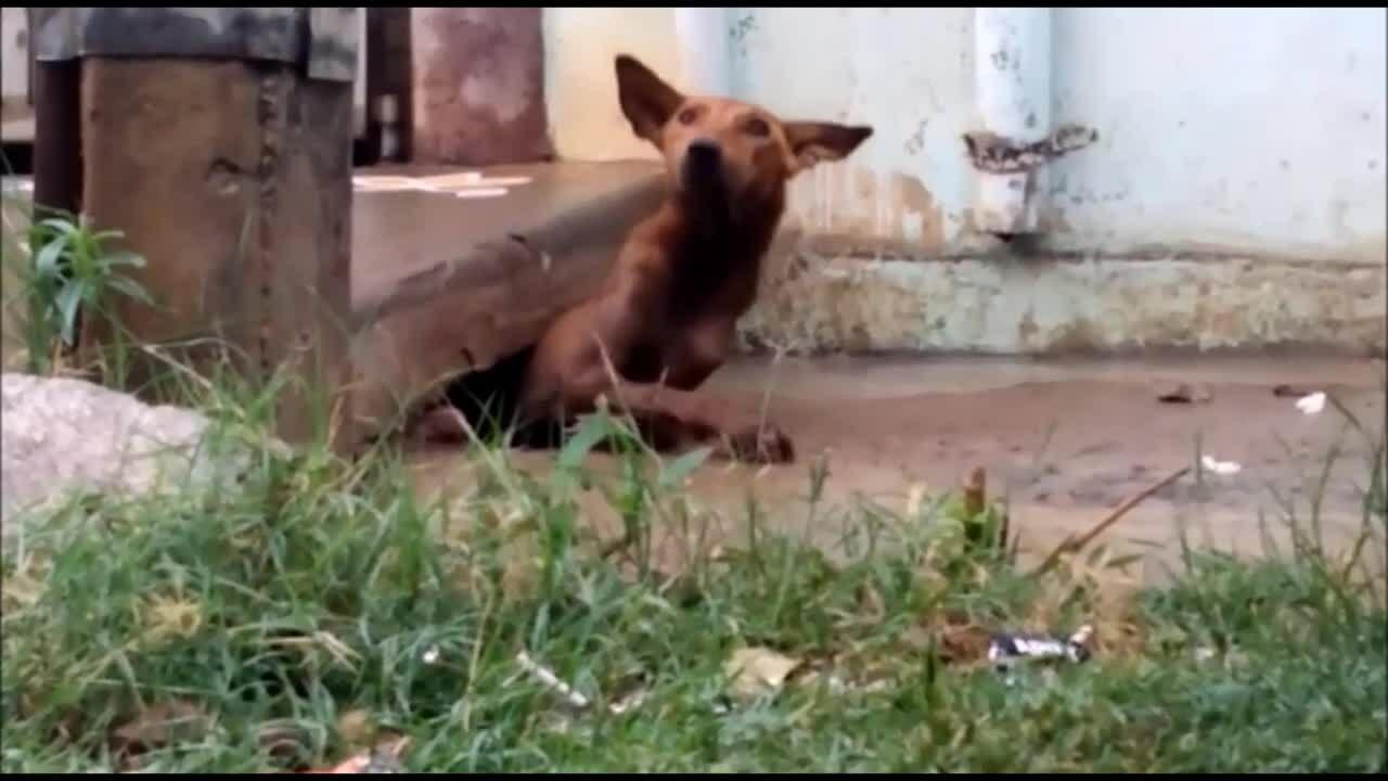 Chó mẹ mang 5 con thoát khỏi nước ngập