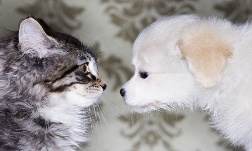 Chó hay mèo thông minh hơn?