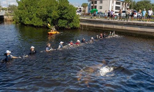 Tạo 'xích người' cứu đàn cá heo mắc kẹt dưới cầu