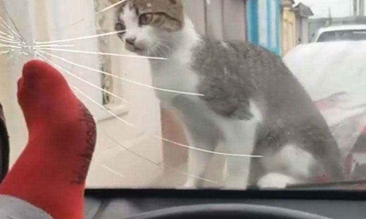 Chủ nhân 'khóc thét' vì đạp vỡ kính xe khi trêu mèo