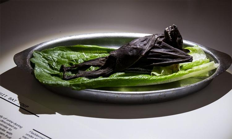 Triển lãm trưng bày những món ăn kinh khủng nhất