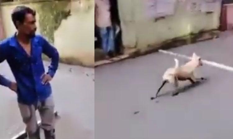 Người đàn ông ngơ ngác vì chó đi vào đường vừa đổ bê tông