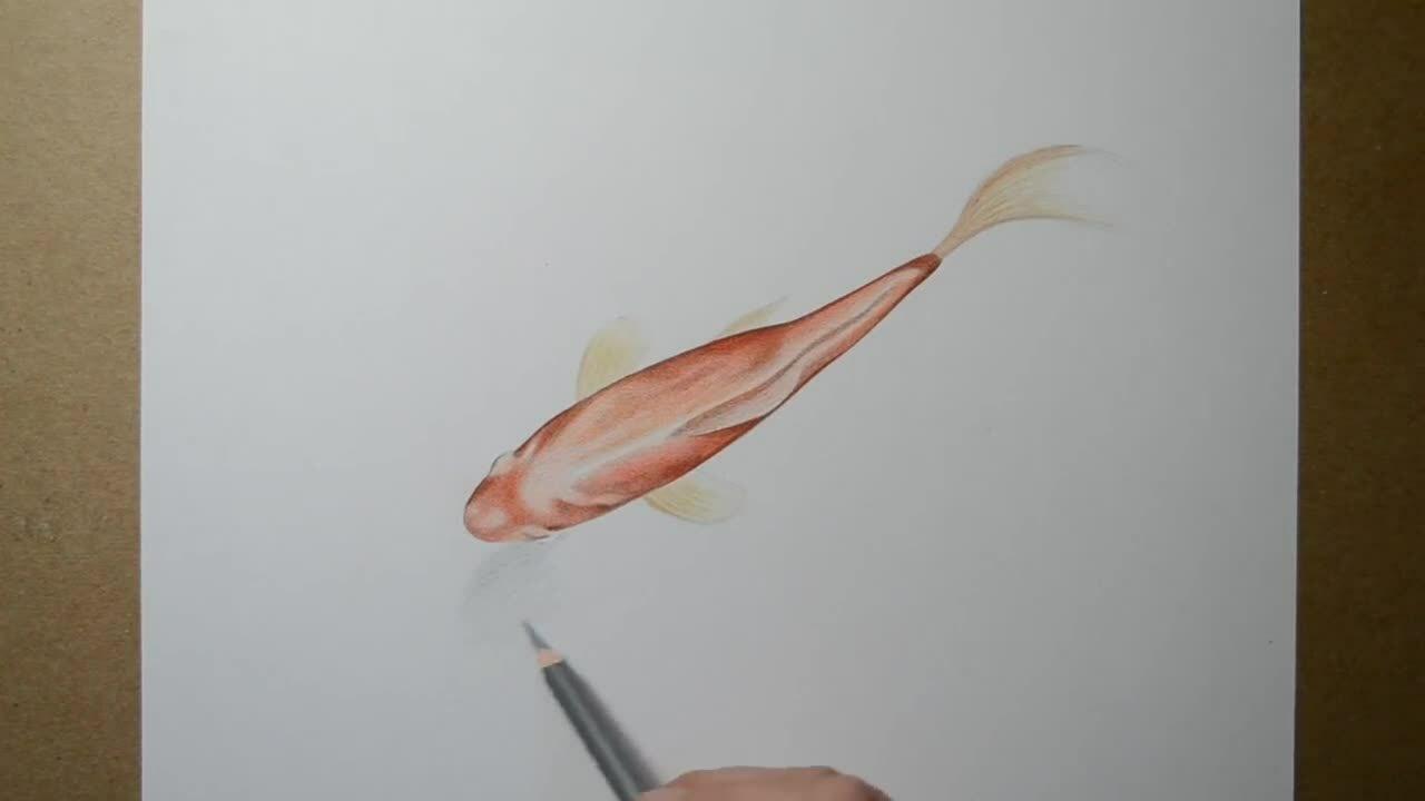 Cách vẽ cá vàng 3D