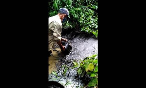 Người dân ở xã Phú Minh vớt dầu thải