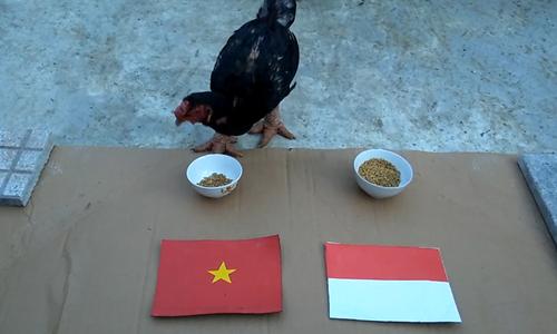 Gà tiến Vua chọn Việt Nam thắng Indonesia