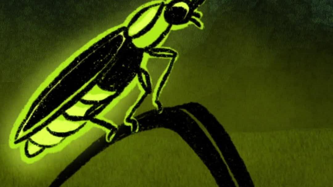 Đèn LED sáng hơn 50% lấy cảm hứng từ đom đóm