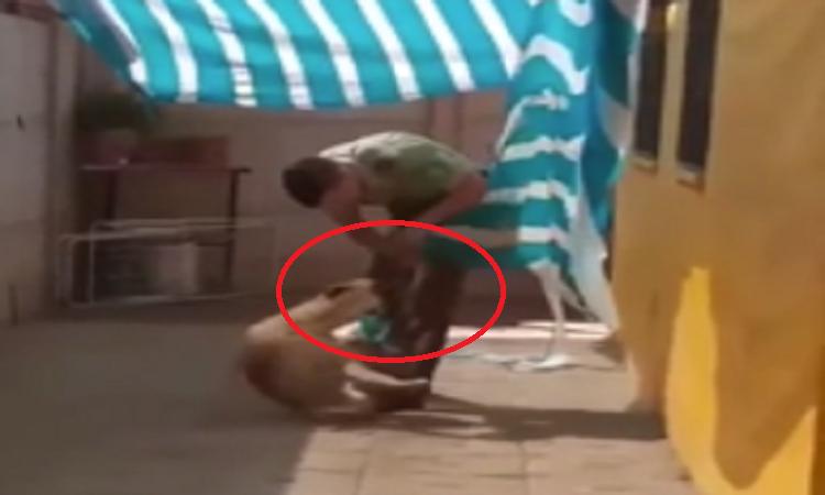 Vượt rào để giải thoát cho chú chó, anh cảnh sát nhận được cái ôm ấm lòngChú chó mừng rỡ khi được 'g