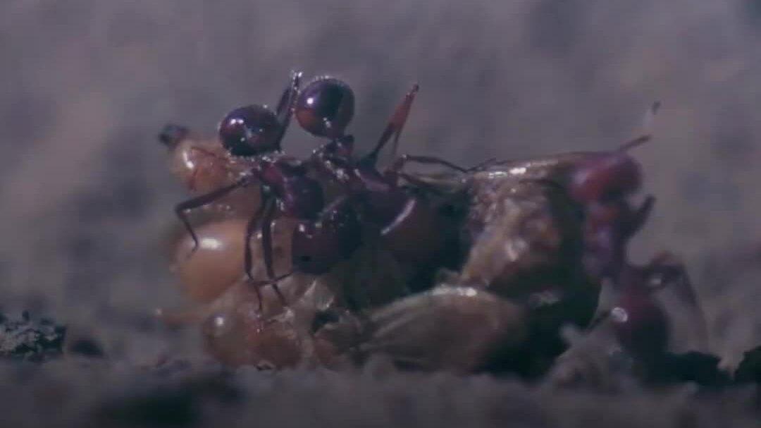 Loài côn trùng độc nhất thế giới