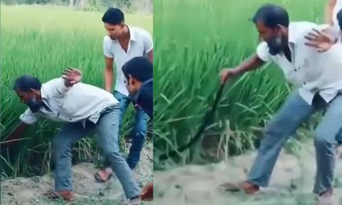 Nhóm người nháo nhào vì tưởng 'rắn khủng' trên ruộng lúa