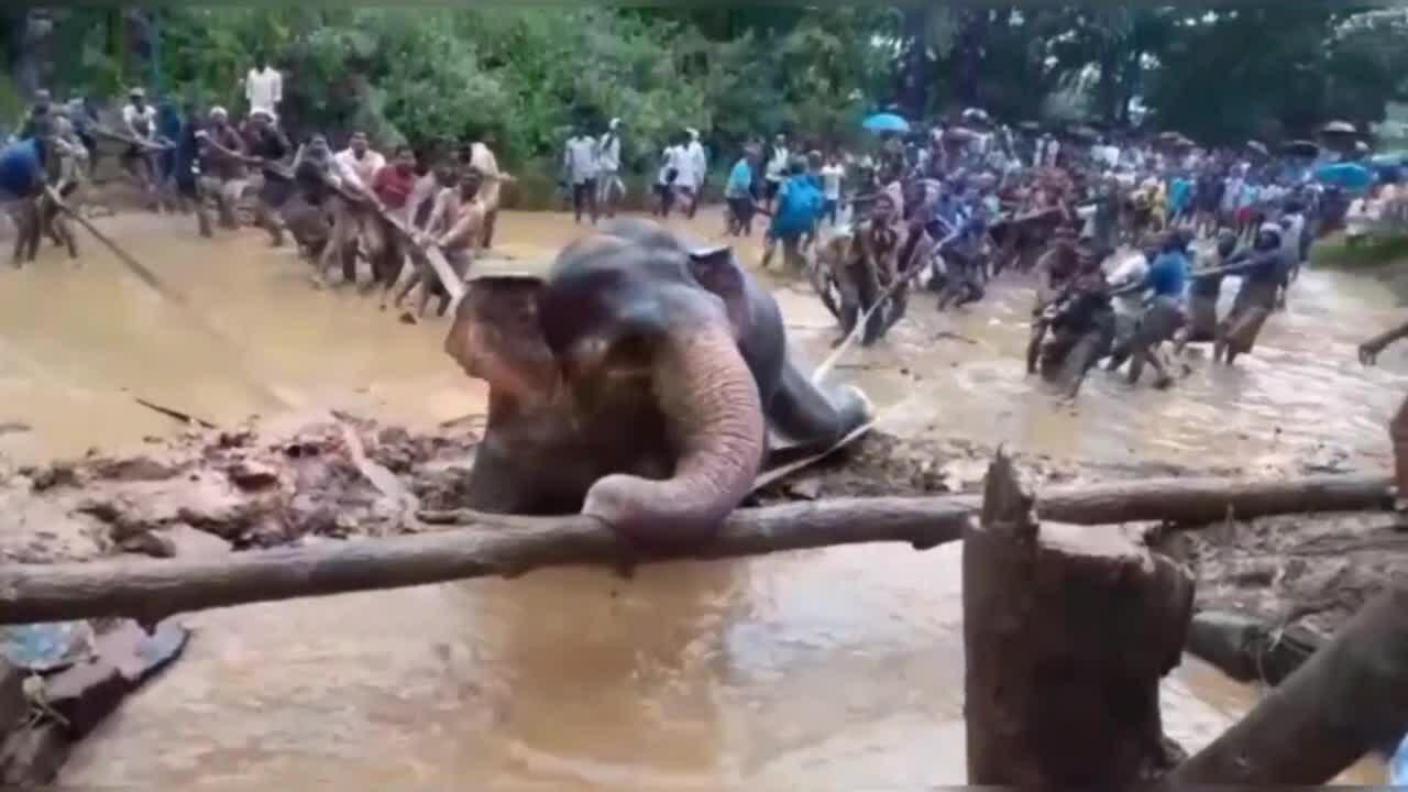 Voi thoát chết đuối nhờ dân làng giải cứu