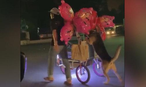 Chó giúp chủ đẩy xe bán bóng bay trên phố