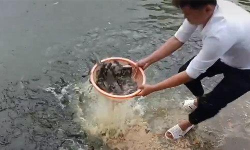 Pha thả mồi bắt cá khó tin của nam thanh niên