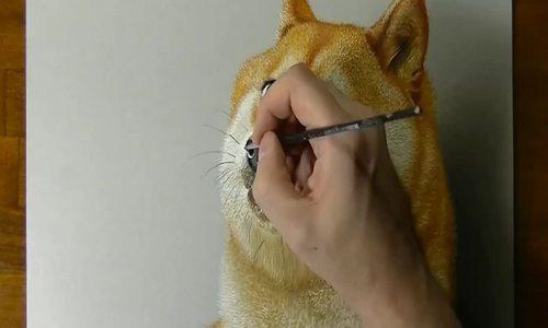 Cách vé chó Shiba 3D