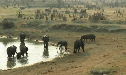 Hà mã xông vào ngâm mình giữa bầy voi đang uống nước