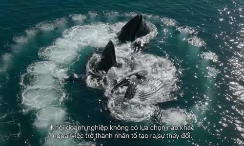WWF làm phim về bảo tồn đa dạng sinh học