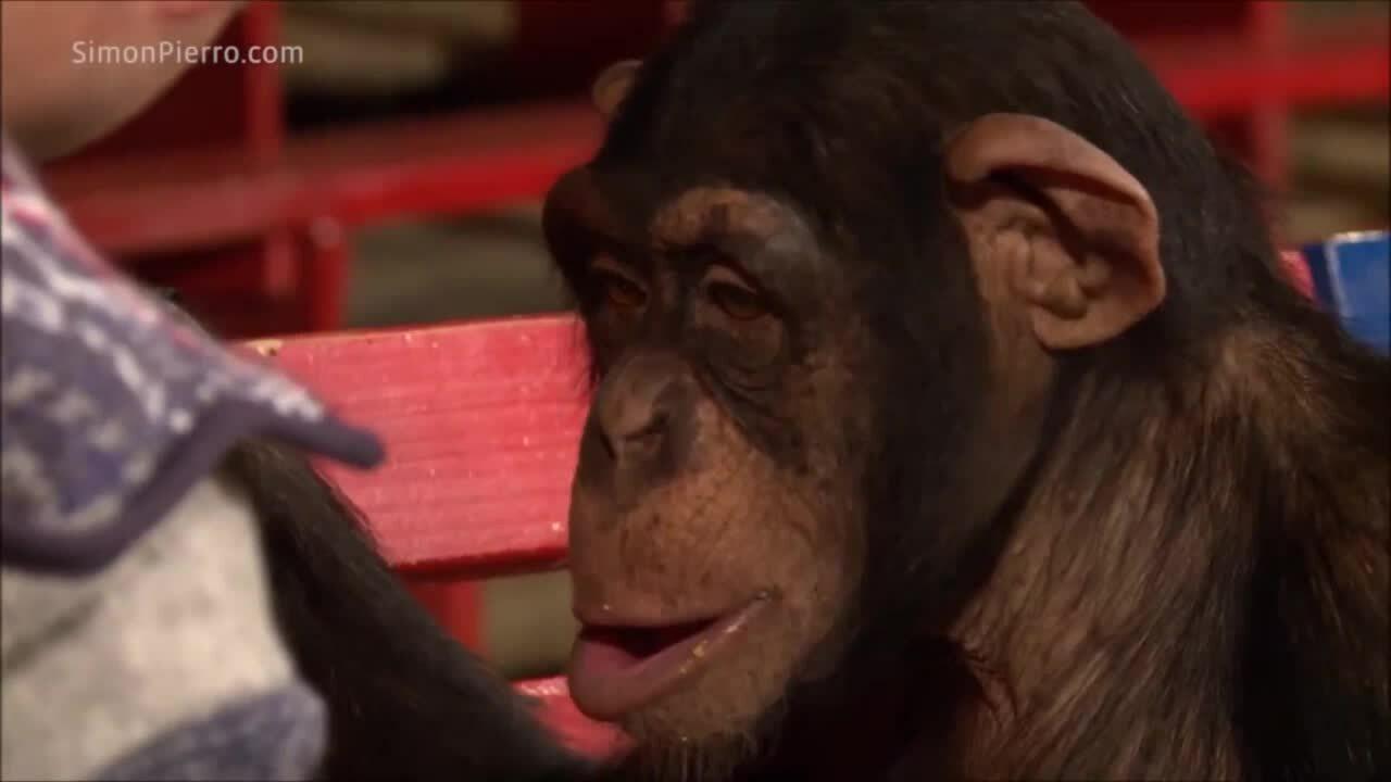 Cậu chủ ảo thuật ra đậu phộng khiến chú khỉ phấn khích