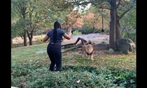 Vướng lao lý vì nhảy vào chuồng sư tử